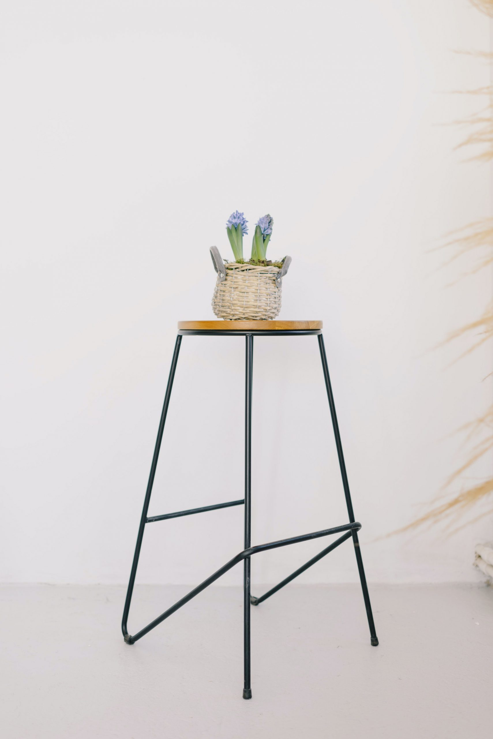 composition-of-stylish-chair-and-potted-crocus-flowers-4048758